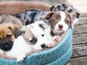 Best Cheap Dog Beds