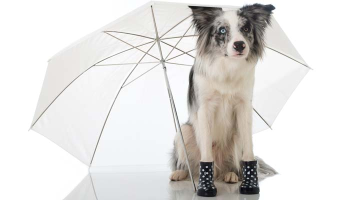 Best Dog Booties For Dogs That Stay On