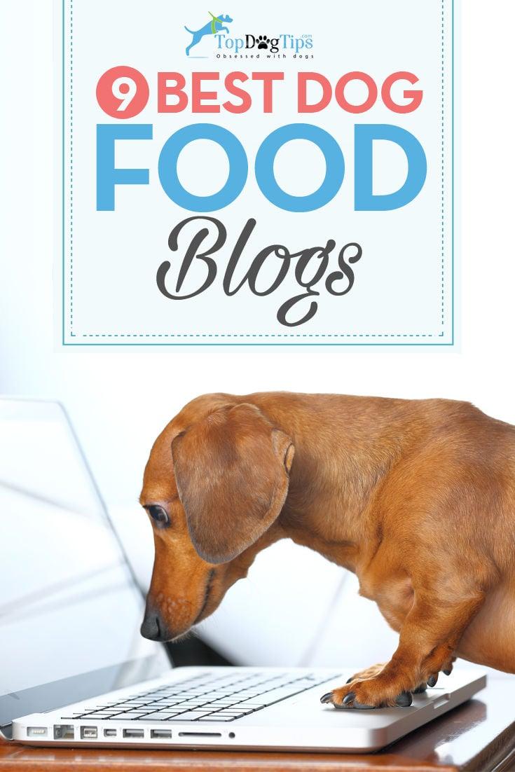 Best Dog Food Blogs