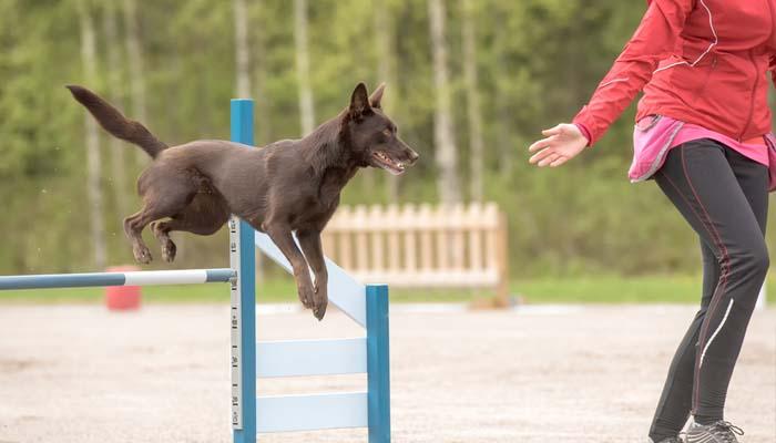Dog Agility Training Classes