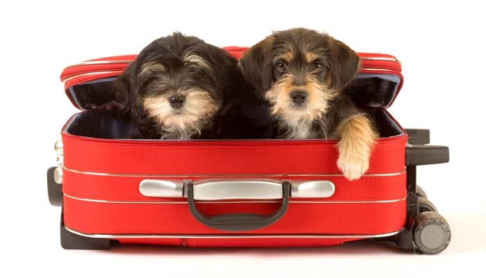 Dog Travel Bags - How to Choose the Right One 3