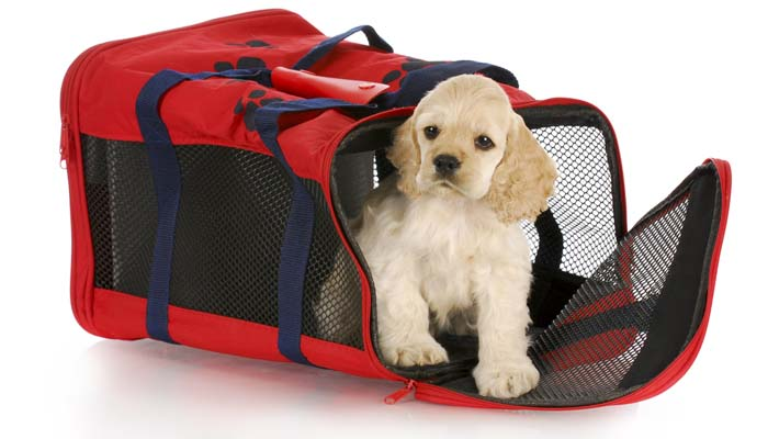Flying With A Dog - Short Dog Travel Guide for Pet Parents