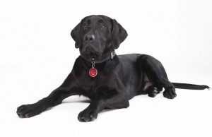 Dog Identification Tags How to Buy Dog ID Tags