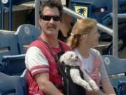 Dog Wins Big At The Ball Park