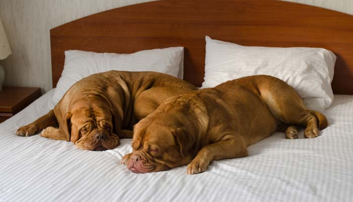Hotels for Dogs