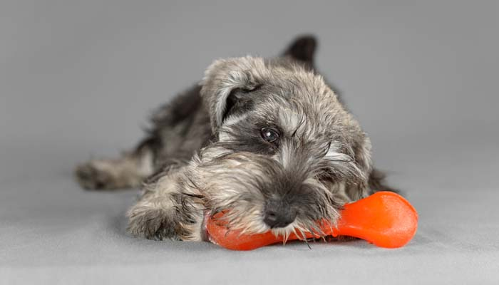 Soft plastic and rubber dog toys for puppies