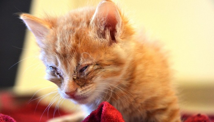 This Dog Donates Blood to Help Kittens