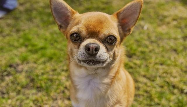 Tiny Pup ROARS