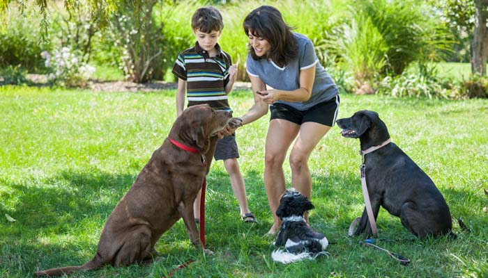 Tips and Tricks for Family Dog Training