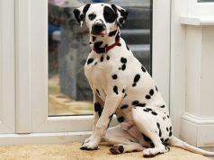 Best Patio Pet Door for Dogs