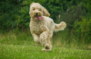 ways to train a hyperactive dog to calm down