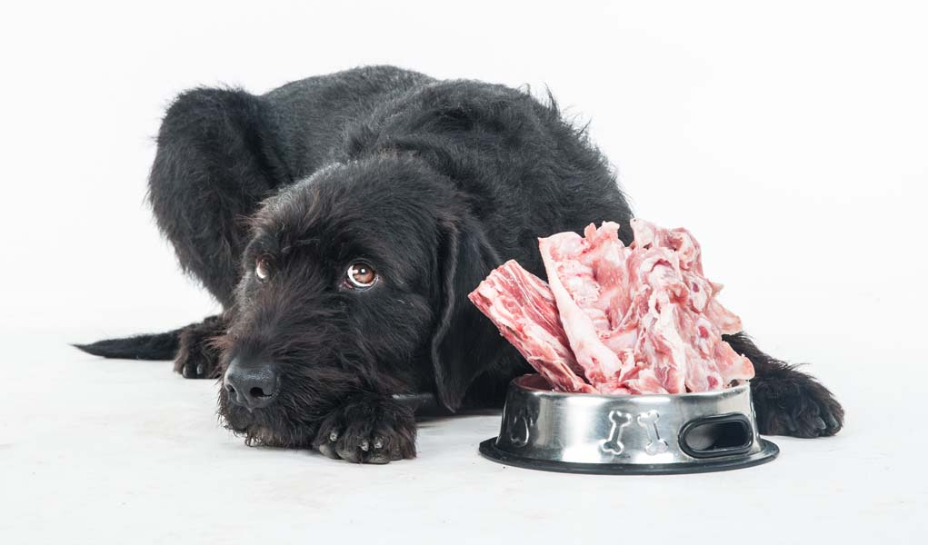 Raw Food Diet Dogs Liver Blood