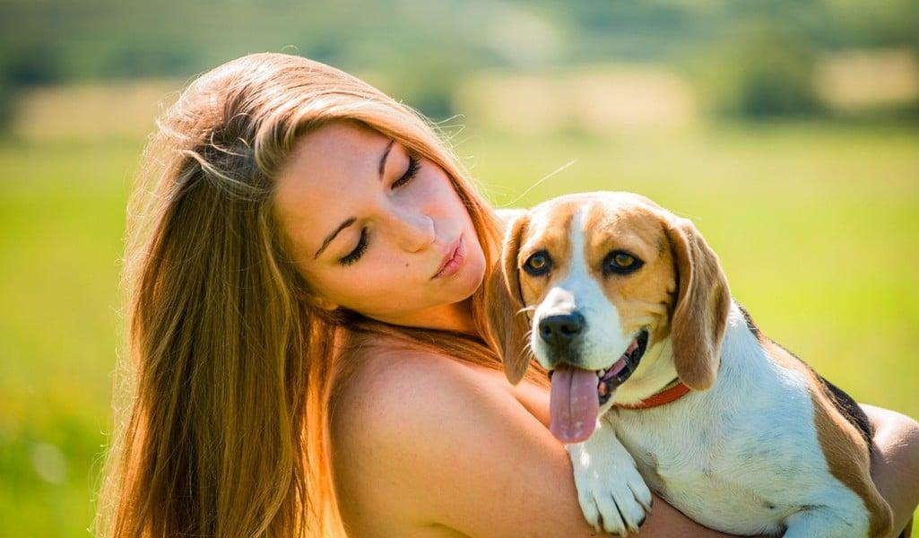 Beagle Breed Profile