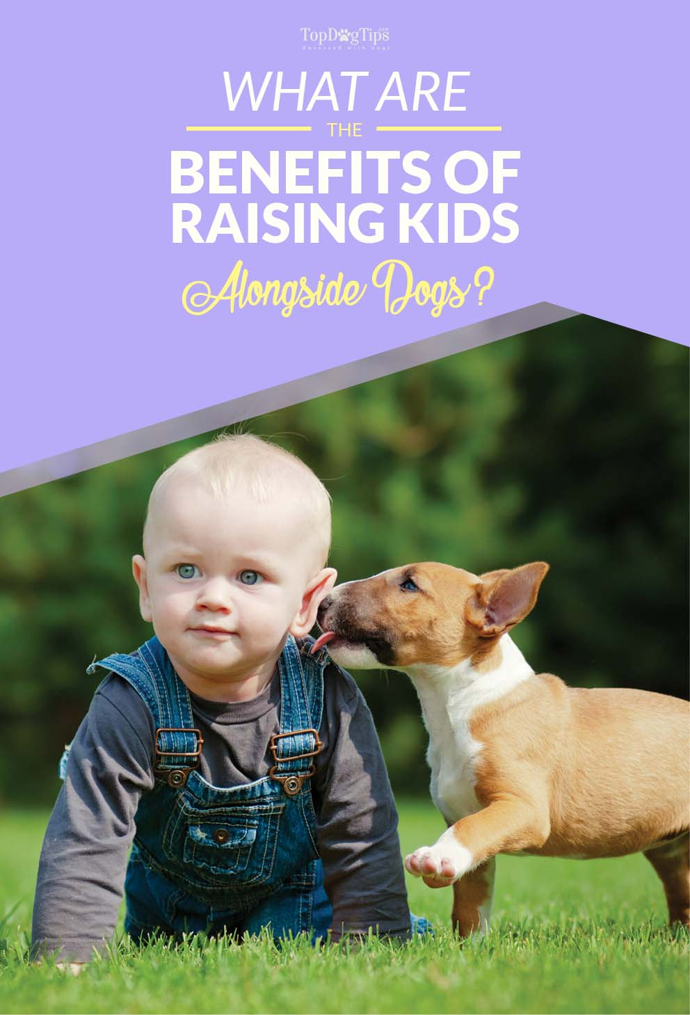 """the importance of raising a good guide dog Original dog bible: the definitive source for the definitive source for all things dog a chapter titled """"the complete guide to feeding your dog."""
