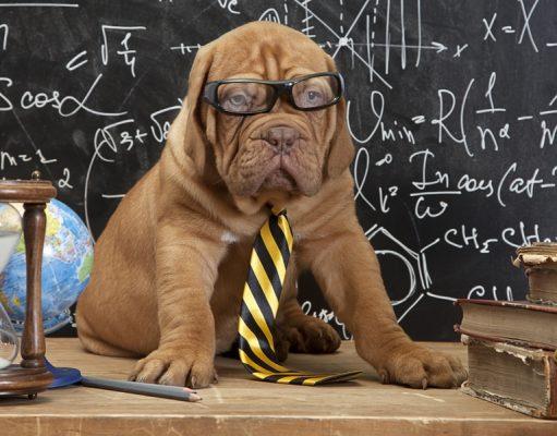 Best Scientific Studies on Dogs