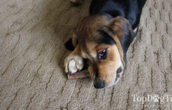 Bully Bundles Dog Chews Review
