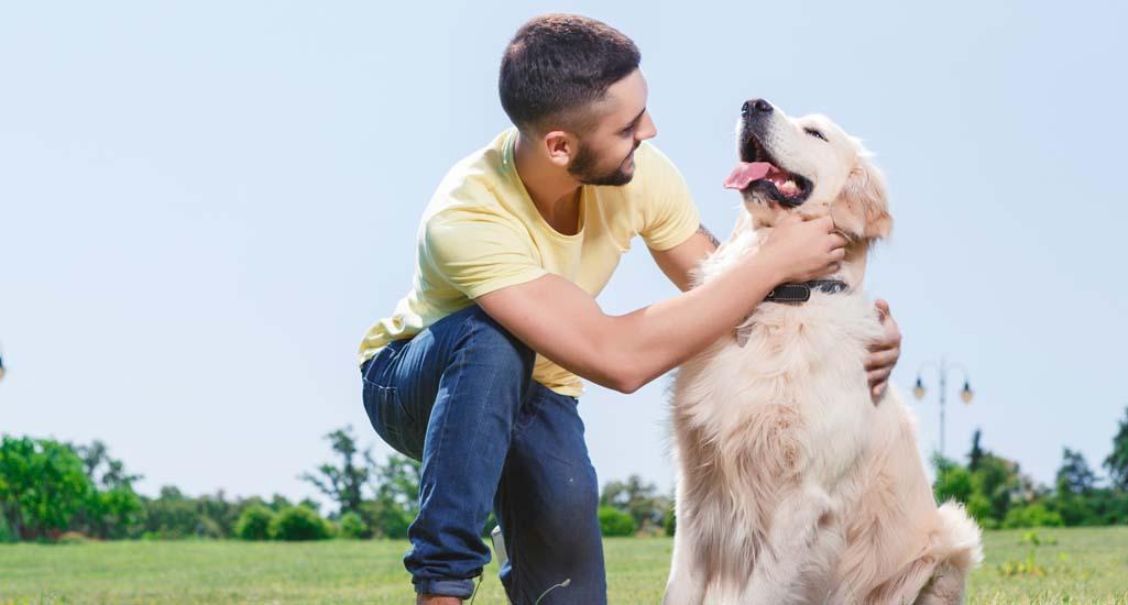 Caring for Labrador Retrievers