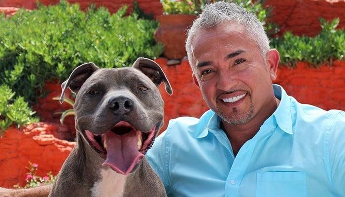 Celebrity Dog Trainer Killed   Dog Training