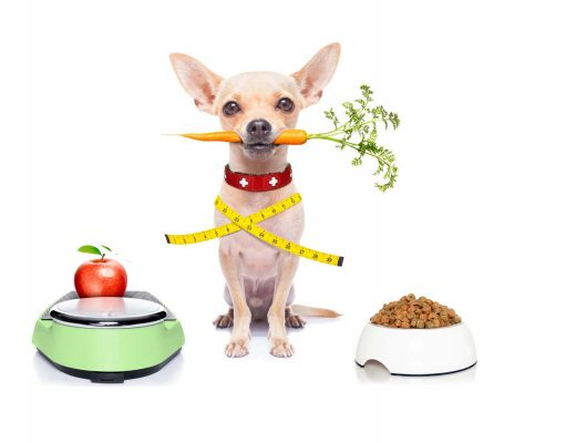 Diets for Dogs and How To Slim Down an Overweight Dog