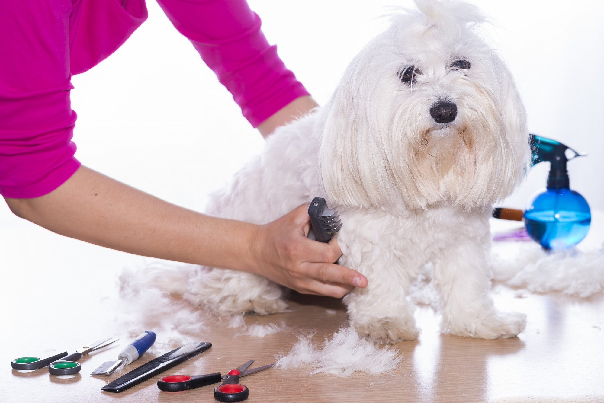 10 Common Dog Grooming Mistakes And How To Avoid Them ... |Dogs Grooming