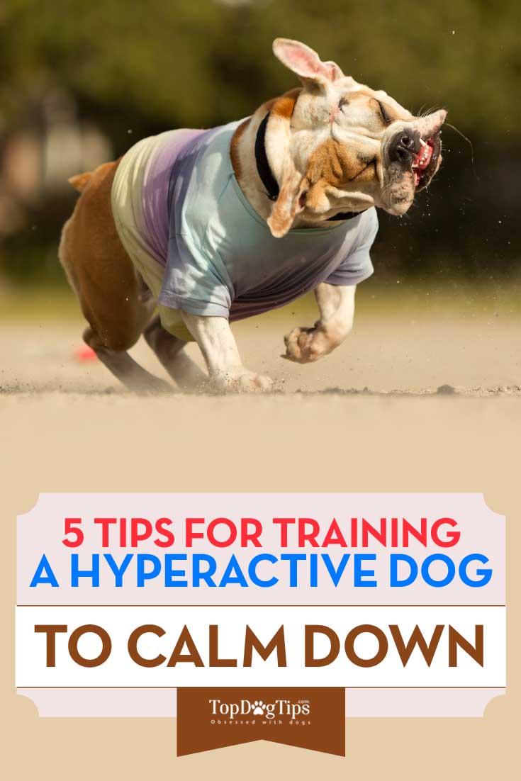 Hyperactive Dog Food