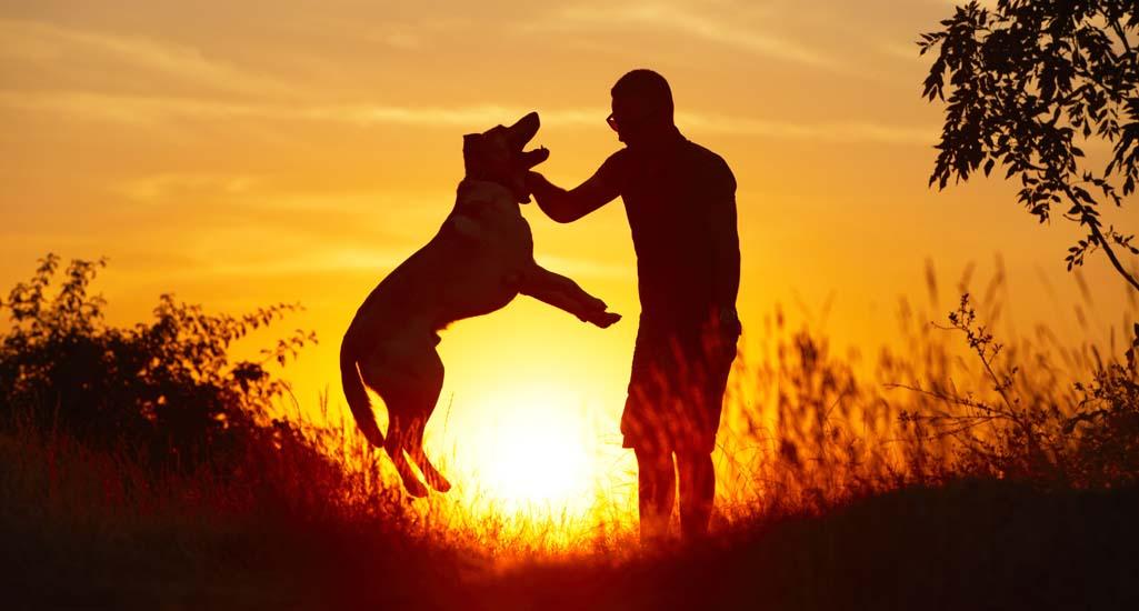 How to Train a Labrador Retriever