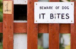 Irish Politician Gets Bitten on Comments About Dangerous Dog Breeds
