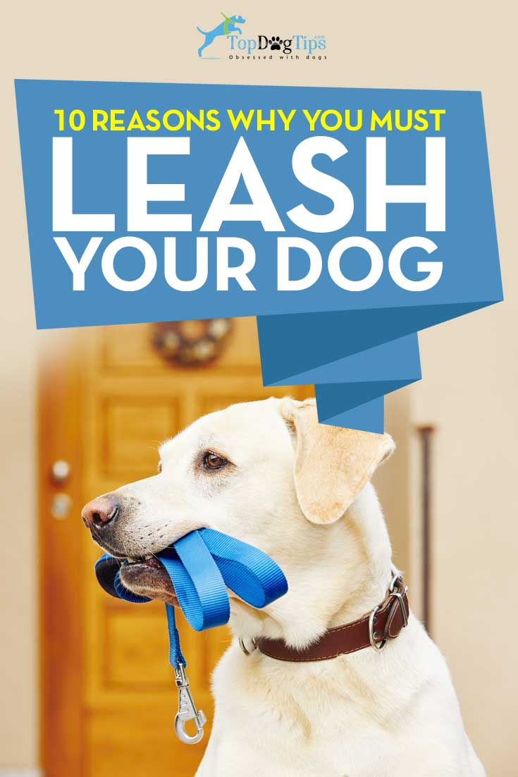 Reasons to Leash Your Dog