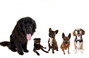 Strangest Dog Breeds