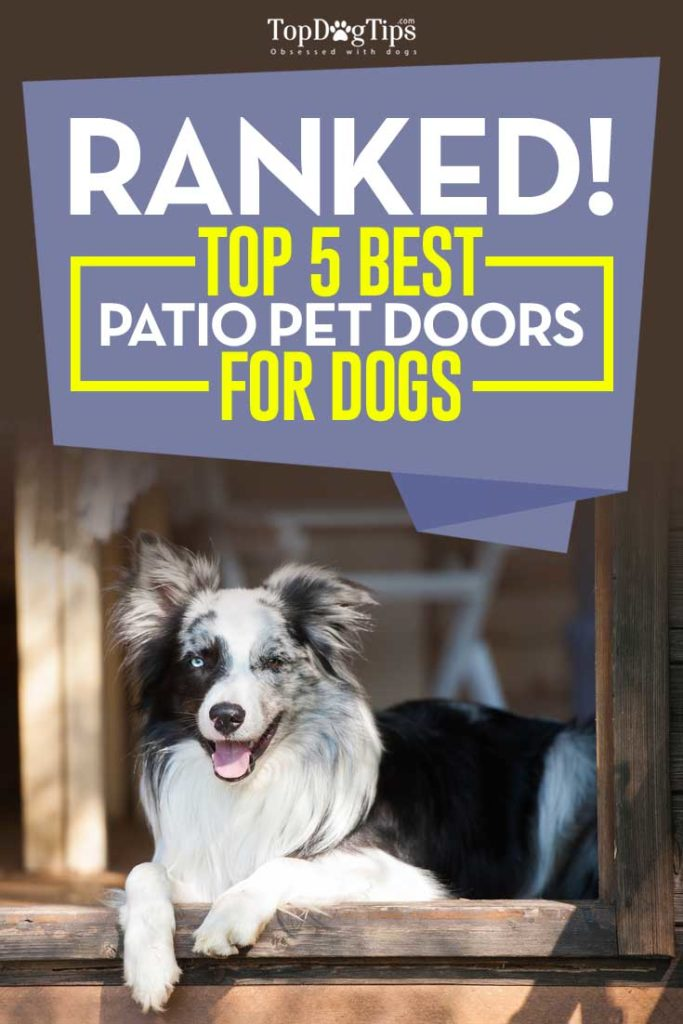 The 5 Best Patio Pet Doors for Dogs