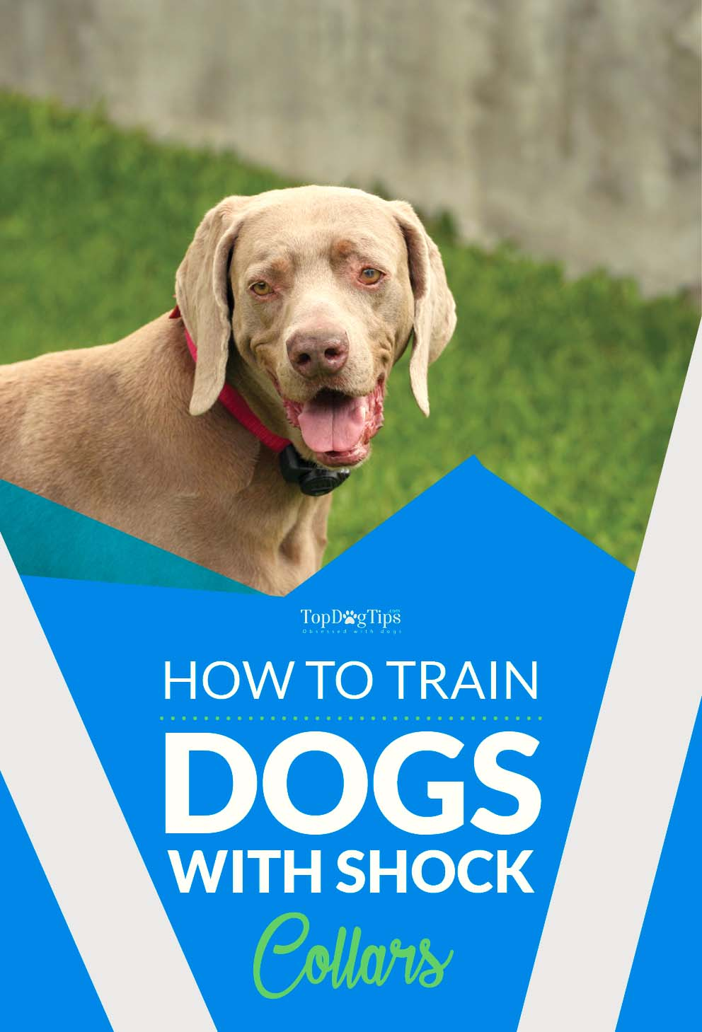Training Dogs with Shock Collars
