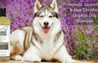 4-Legger Organic Shampoo for Dogs Review