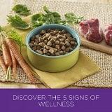 Top Best Sensitive Stomach Dog Foods Reviews