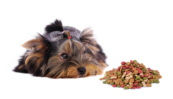 What to feed yorkshire terrier puppies