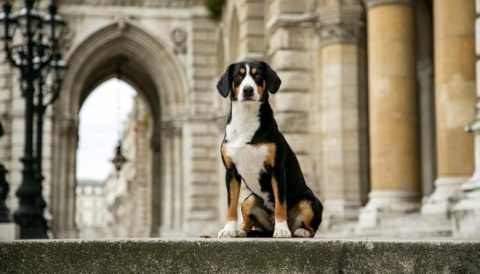 Dog grooming oakley cincinnati heritage malta dog grooming oakley cincinnati solutioingenieria Gallery