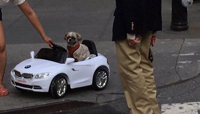 "Dog ""Driving"" a BMW? C'mon! – Top Dog Tips"