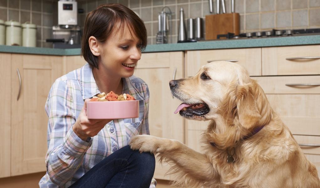 Ask a Dog Sitter: Dog Sitting Rates & Dog Sitter Salary ...