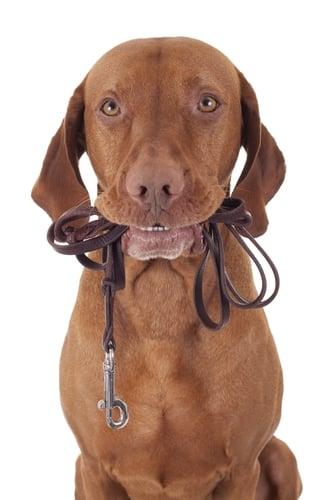 Dog Walker Salary & Dog Walking Rates