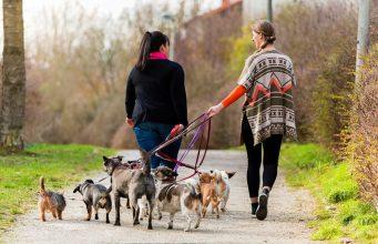Dog Walker Salary