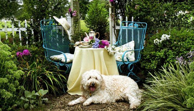 Doggy Tea Party Draws Hundreds