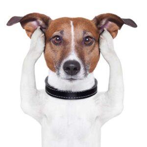 Environment impacts dog training