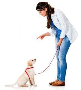 Proper dog training is essential