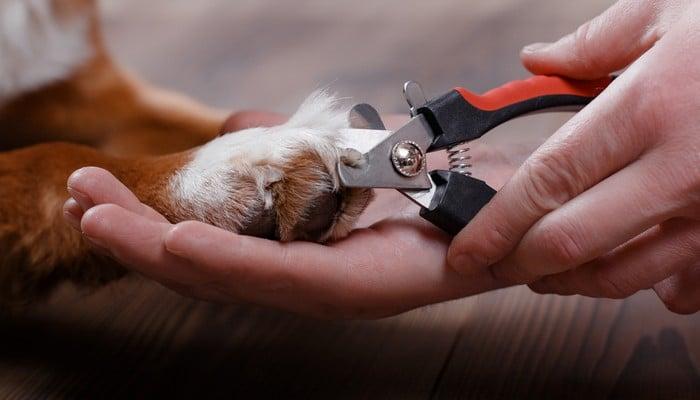 Aesthetic Dog Grooming