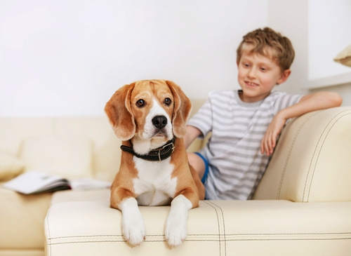 Beagle as Small Dog Breeds That Are Good With Kids