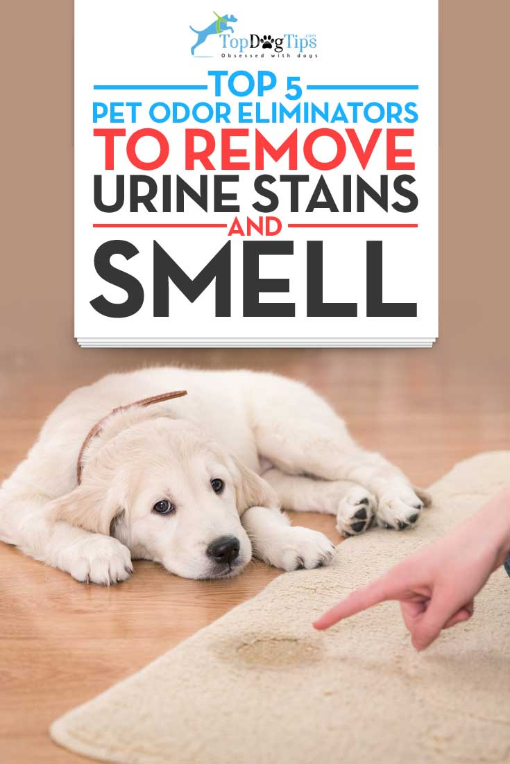 Top Best Pet Odor Eliminators For Removing Dog Urine Smell