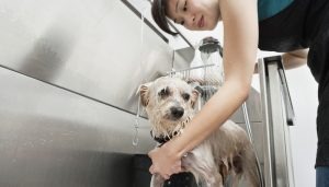 best cheap dog grooming tub for home