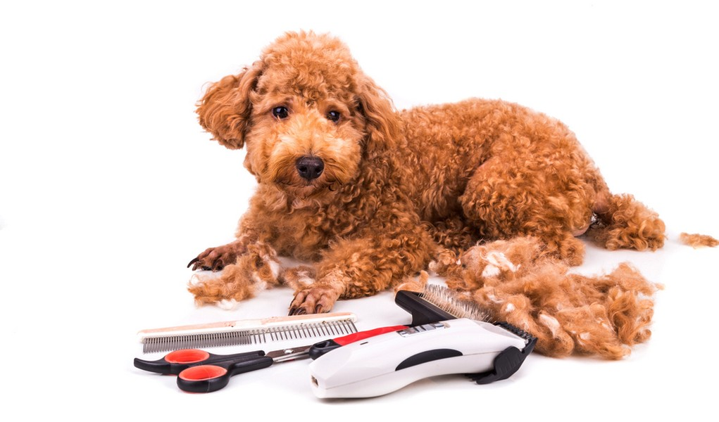 best dog grooming blogs