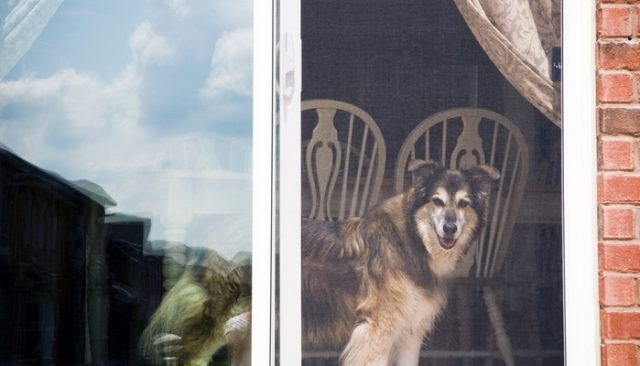 Can You Install A Dog Door In A Sliding Glass Door