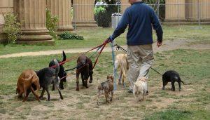 Dog Walker Jobs