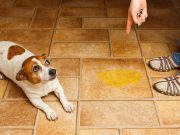 Help Your Dog Communicate with the Barking Mat